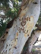 22nd Oct 2016 - Nawa  loves Omli