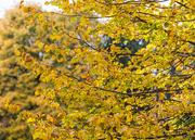 26th Oct 2016 - Autumn Colour