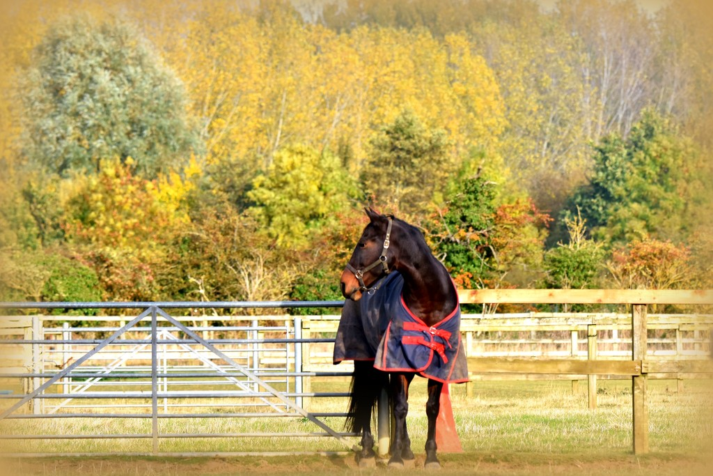 Viewing the autumnal colours by rosiekind
