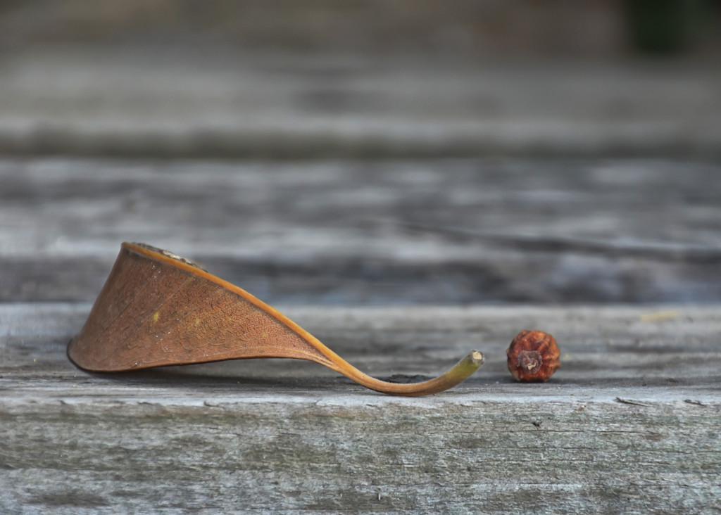 Leaf by salza