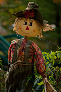 26th Oct 2016 - Scarecrow