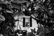 27th Oct 2016 - Secret Garden House