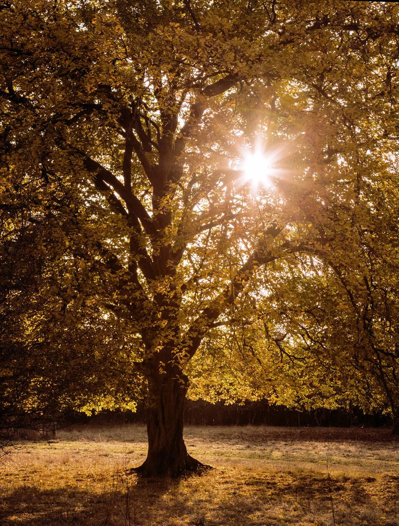 Loving Autumn by shepherdmanswife