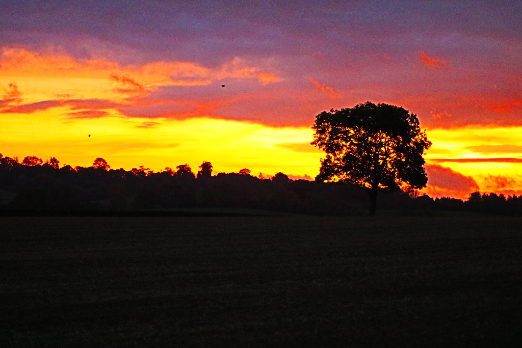 Oak Tree Sunset by phil_sandford