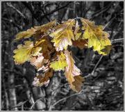 27th Oct 2016 - Colouring Autumn 2