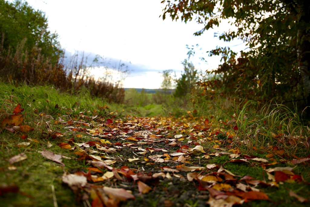 Day 301 - Autumn Leaves.. by wag864