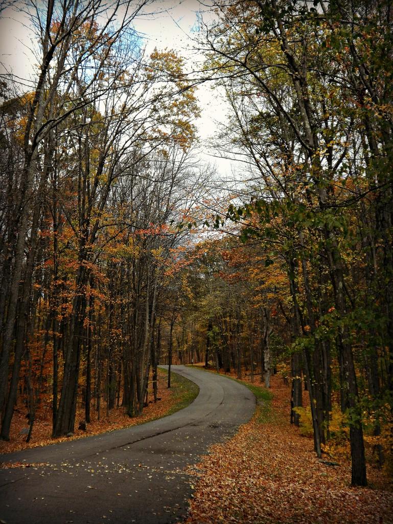 Hidden Beauty On A Winding Road  by jo38