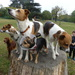 5 Dogs On A Tree Trunk by snoopybooboo