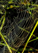 27th Oct 2016 - One Little Spider Spent a Busy Night