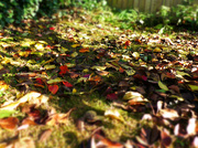 28th Oct 2016 - leaves