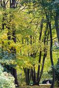 28th Oct 2016 - Autumn in Hampshire