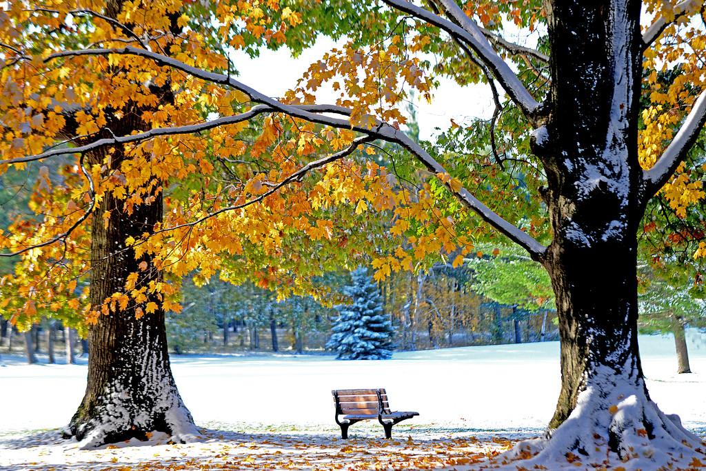 Changing of the seasons by fayefaye