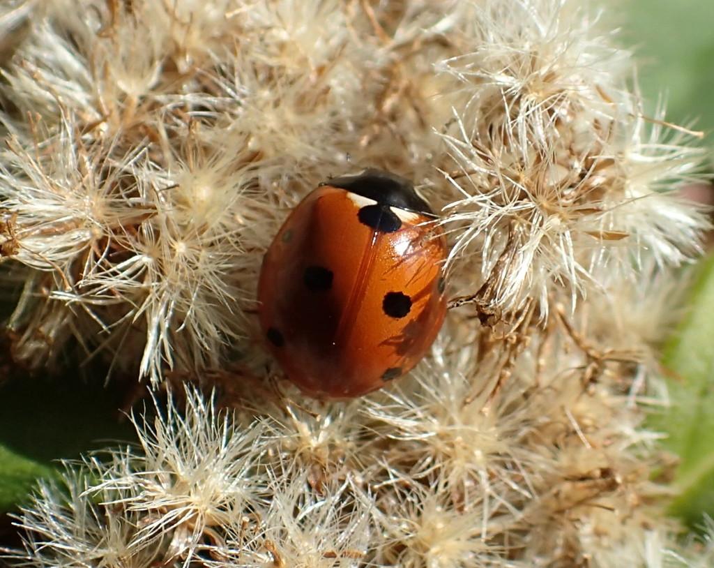 Ladybug Nest by cjwhite