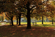 28th Oct 2016 - Lovely autumn time in old park...