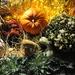 Just love fall................
