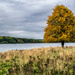 Autumnal Tree  by rjb71