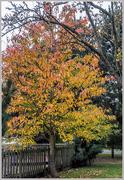 29th Oct 2016 - Autumn Colours