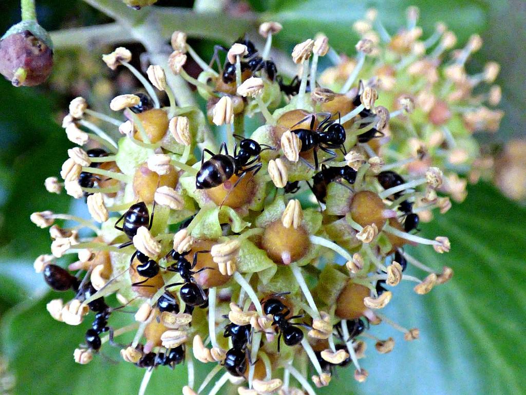 Ant feast by julienne1