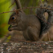 Squirrel on the Log! by rickster549