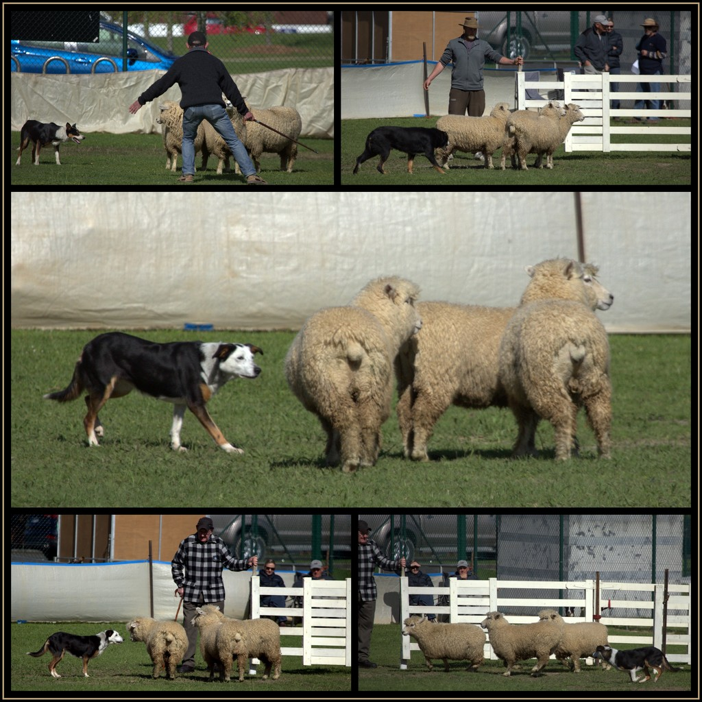 Action at the A&P show by dide