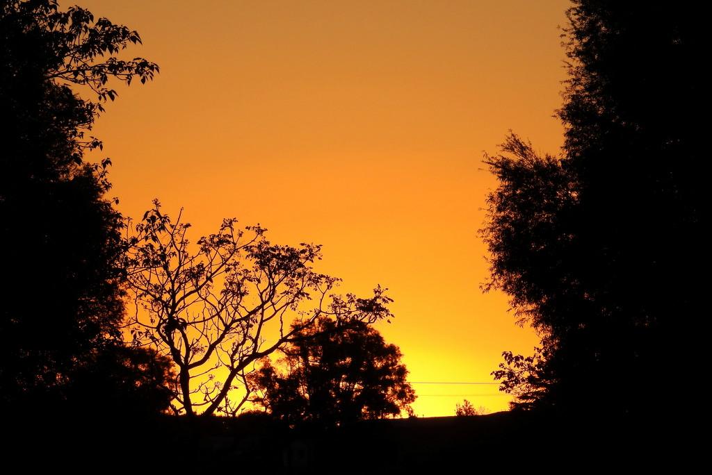 Fiery Sunset by nickspicsnz