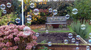 30th Oct 2016 - Bubbles