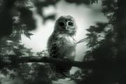 28th Oct 2016 - Spooky Owl