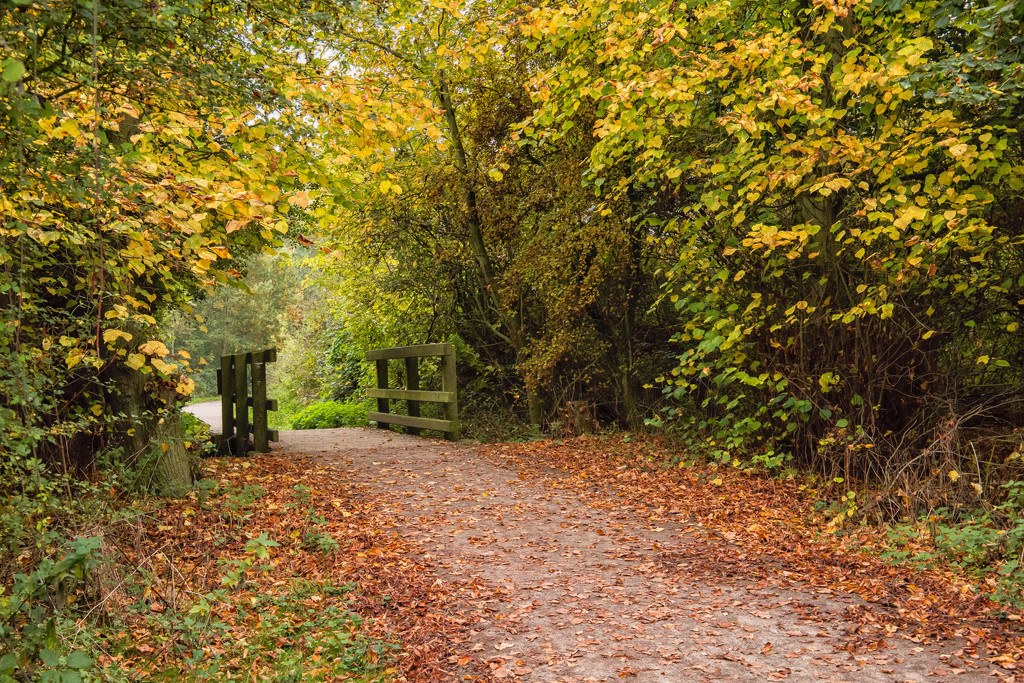 2016 10 Autumn walk by pamknowler