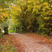 2016 10 Autumn walk by pamknowler