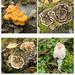 2016 10 30 fungi by pamknowler