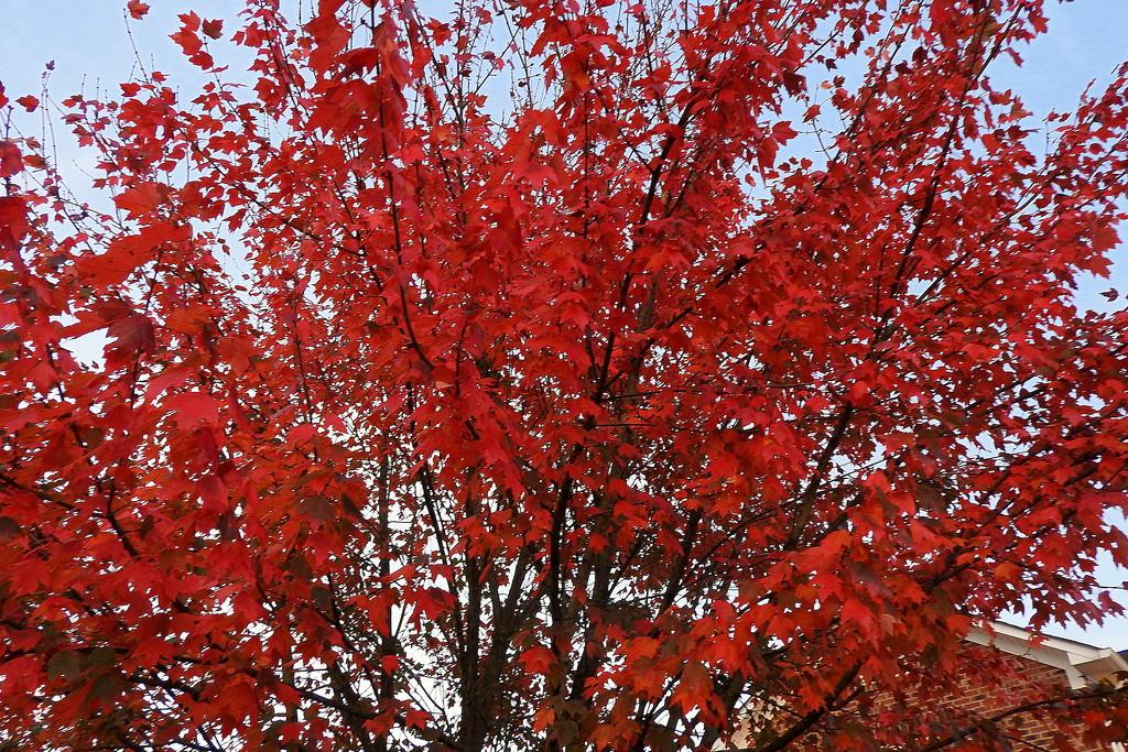 Looks like Autumn, feels like summer by homeschoolmom