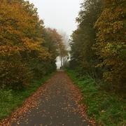 31st Oct 2016 - Foggy Autumn Walk