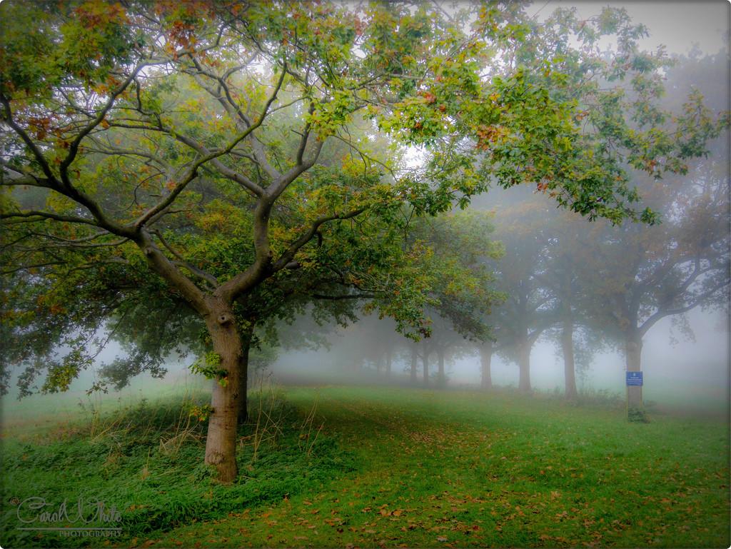A Foggy Autumn Morning by carolmw