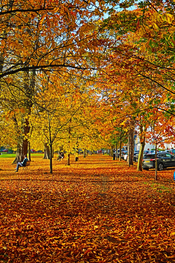Autumn Leaves by phil_sandford