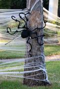 28th Oct 2016 - Spider