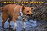 31st Oct 2016 - Happy Hank-o-ween