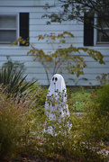 31st Oct 2016 - Happy Halloween!