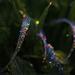 Jewels in Nature  by jesperani
