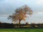 1st Nov 2016 - Sunlit tree