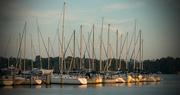 2nd Nov 2016 - Sailboats at Sunset!