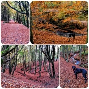 3rd Nov 2016 - Sorry, another collage but couldn't choose which pic! This is a walk we do round tockholes reservoir regularly, a lovely walk, especially in autumn. But this year it is particularly stunning with the autumn colours due to the mild weather