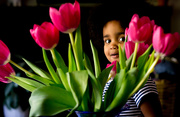 3rd Nov 2016 - Toddler and Tulips