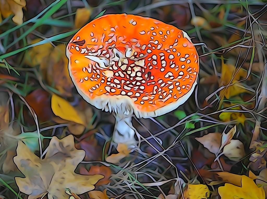 magic mushroom by quietpurplehaze