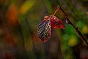 2nd Nov 2016 - leaves