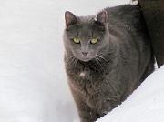 16th Dec 2010 - Broketail snow cat.