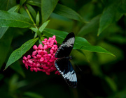3rd Nov 2016 - Throwback Thursday in the Butterfly room