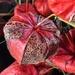 vegetal lantern. by cocobella