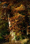 4th Nov 2016 - Light in the woods