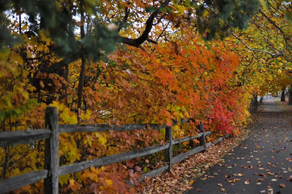 Autumn walk by loweygrace