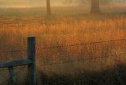4th Nov 2016 - Sun CreepingThrough the Fog
